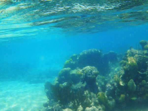 Coral and Reflection-Akumal