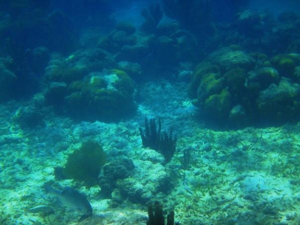 Coral-Reef-Rocks