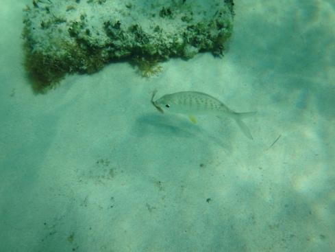 Fish eats-Cozumel
