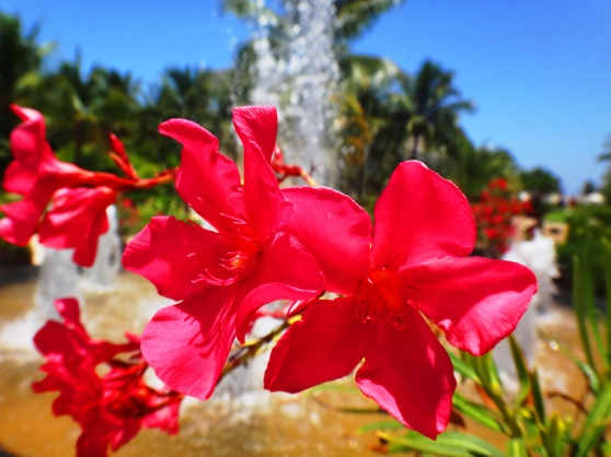Flowers at fountain at hotel in Tulum