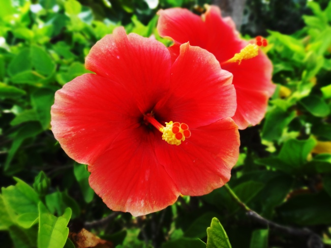 Flowers-Cozumel-Day 1