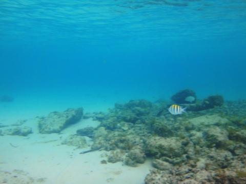 Major fish-Cozumel