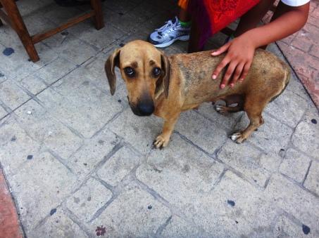 Sad dog at Dinner-Cozumel-Day 3