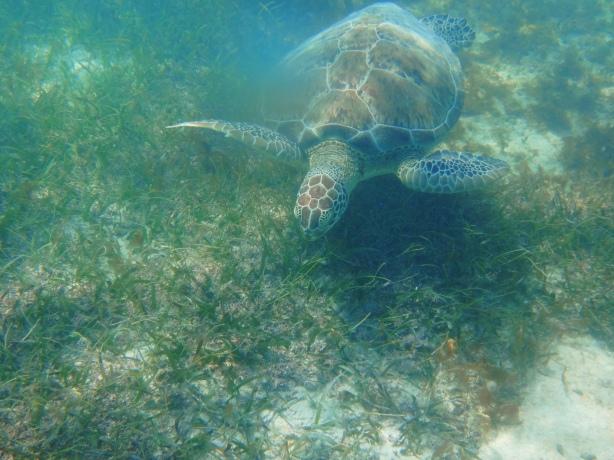 Turtle 10-Akumal