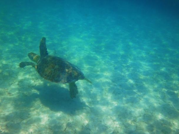 Turtle 5-Akumal