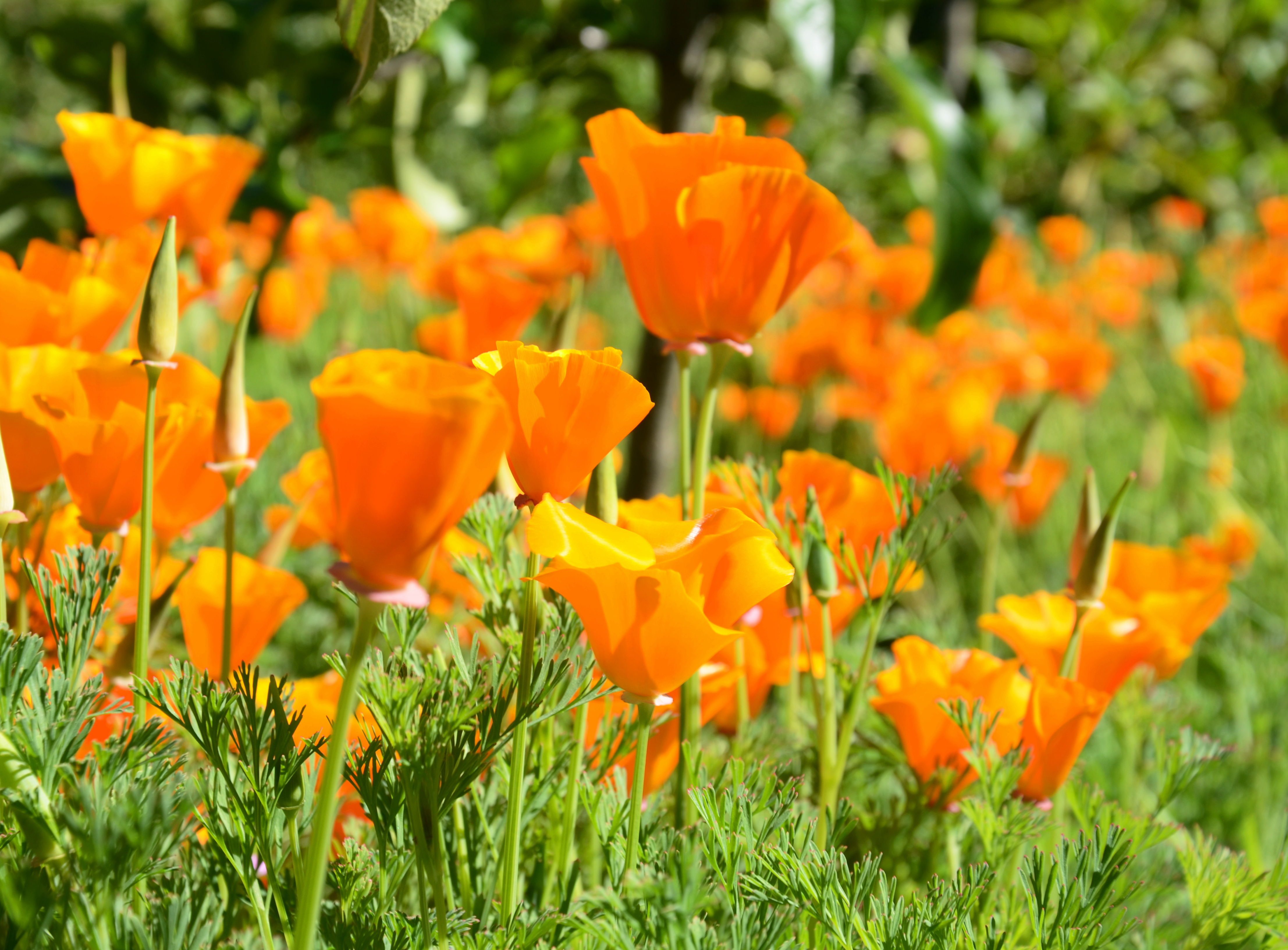 Pretty Orange Flowers Pray Pack Pursue