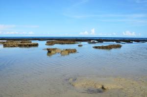 December 21 2014 croc beach 3