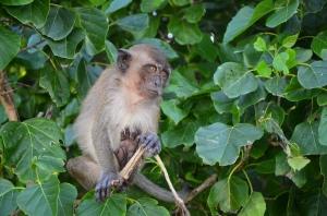 Mik Monkey 1